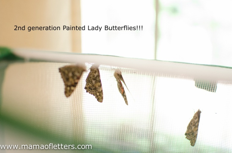 2nd gen butterflies!-2